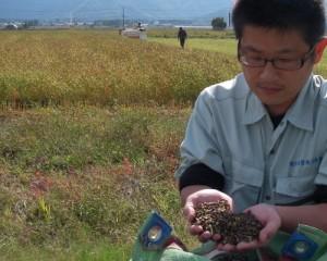 自社におけるそば粉になるまでの、玄ソバの栽培と管理。