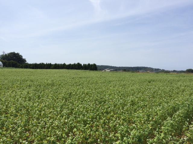 福井県産夏の新蕎麦