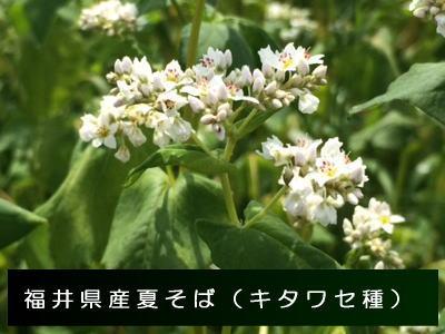 福井夏そば(キタワセ種)