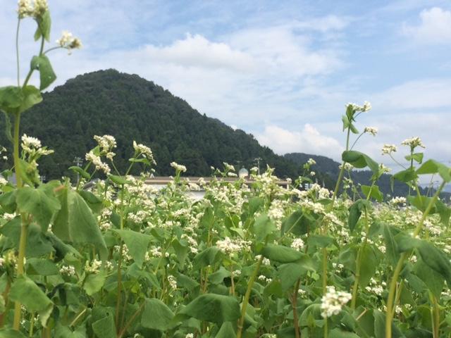 平成28年産福井県秋蕎麦