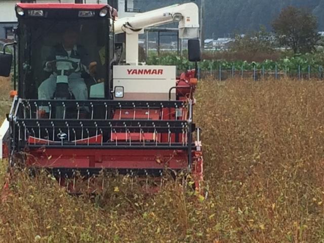 2018年福井県産ソバ収穫