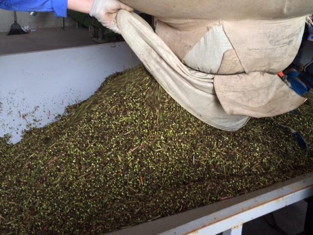 2018年福井県産ソバ収穫(早刈り)