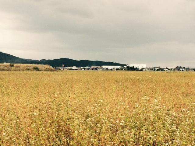 2016年産福井県秋蕎麦(福井市)
