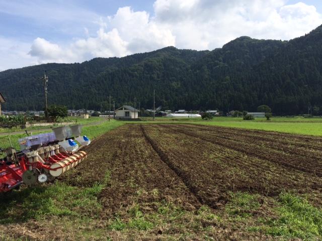 そばの実の播種(種まき)の作業風景
