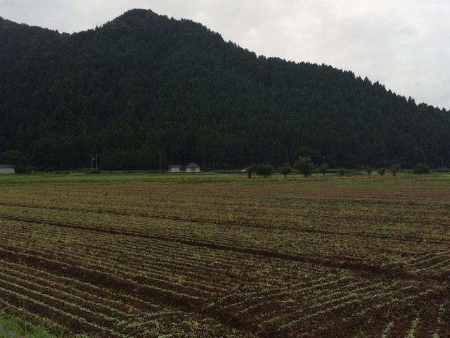 台風5号通過時の蕎麦圃場(福井県越前市)