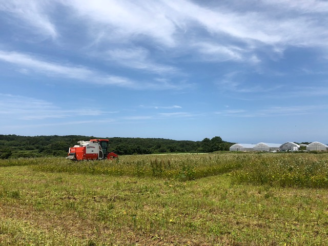 平成30年福井県産「夏の新蕎麦」の刈取り風景