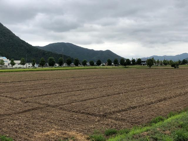 播種(種まき)後のソバ圃場