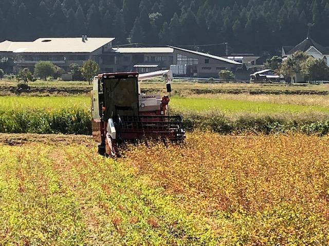 ソバの刈取り風景