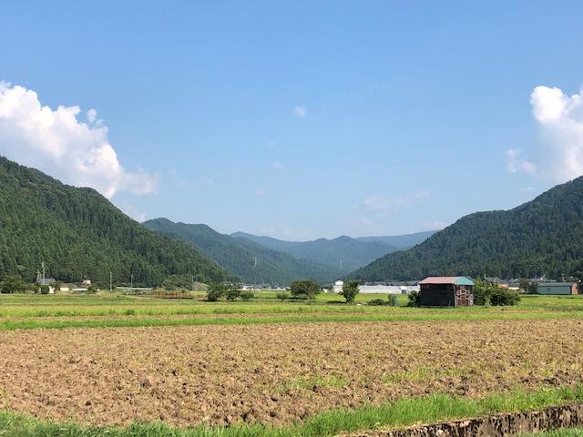 越前市山室地区のそば畑