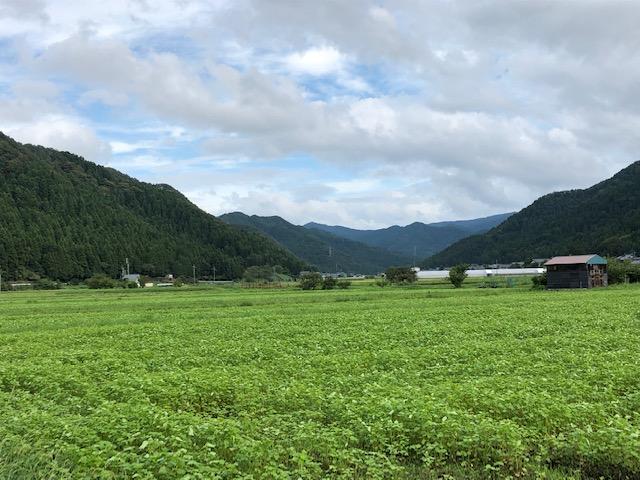 種播きから一ヶ月経過した越前市山室地区のそば畑