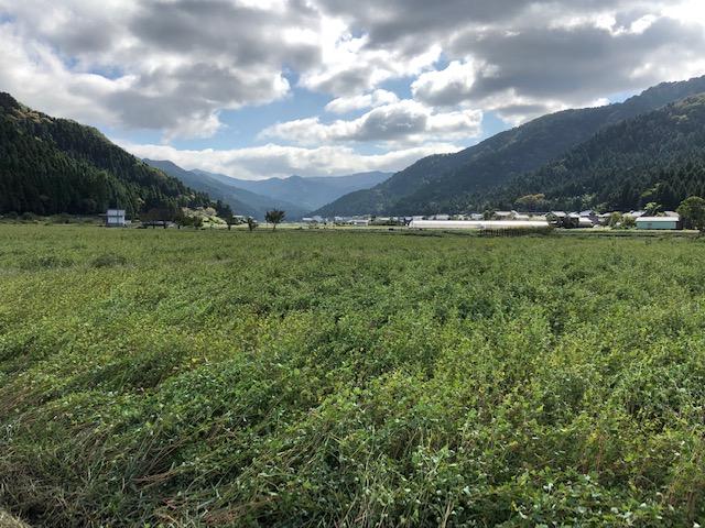 台風19号通過後の福井県のそば畑