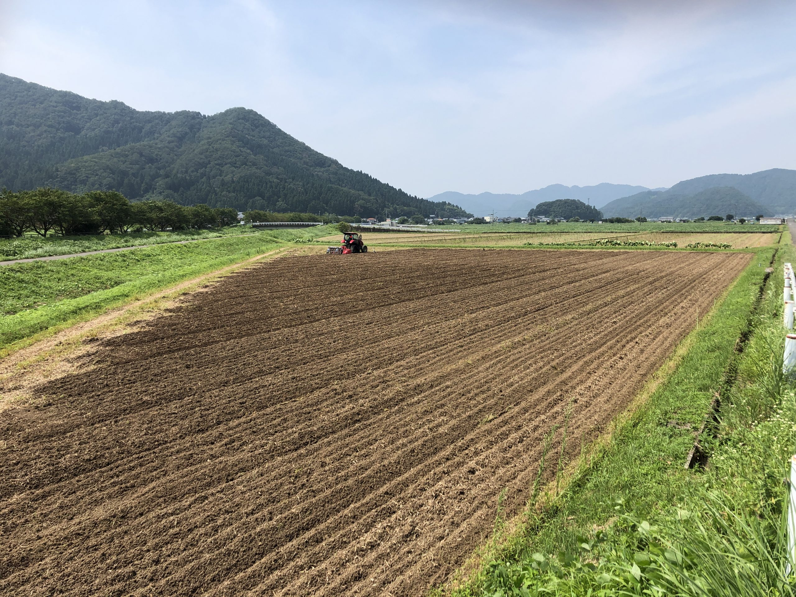 令和2年福井県産秋ソバの播種(種まき)全景状況
