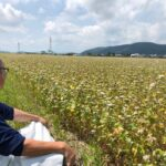 収穫直前の福井県夏そば圃場