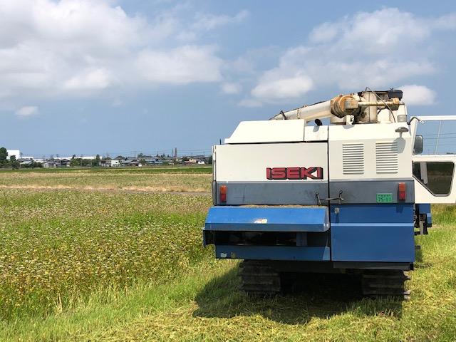 福井県産夏そばの収穫状況