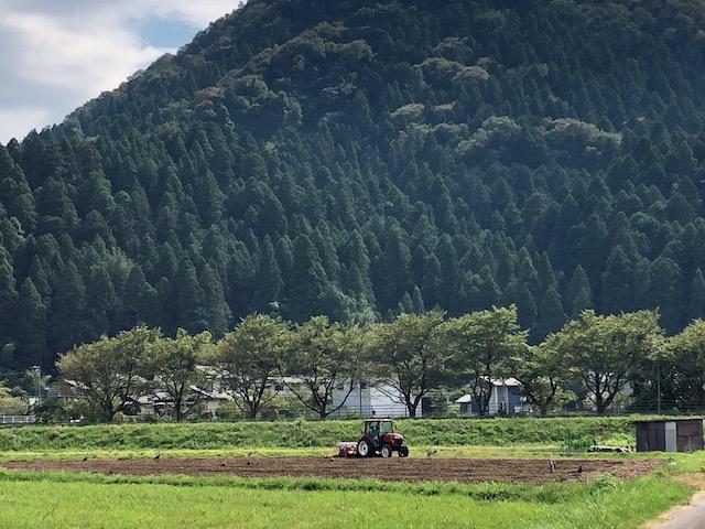 令和3年福井県産秋ソバの播種(種まき)状況