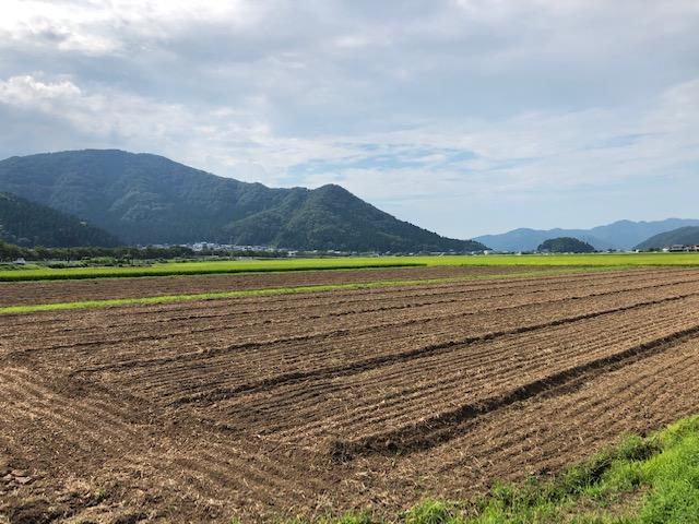 令和3年福井県産秋ソバの播種(種まき)完了全景状況